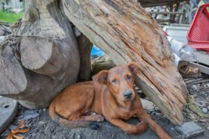 El Capa ha rescatado 159 mascotas abandonadas durante la cuarentena 1