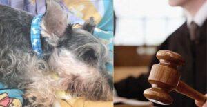 Clifor, el perrito con epilepsia que juez de Colombia reconoció como miembro de una familia 1