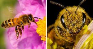 Más de un millón y medio de abejas fueron envenenadas 11