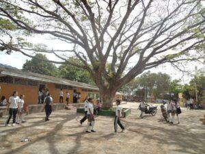 Procuraduría sancionó con destitución e inhabilidad a docente de Ibagué - 1