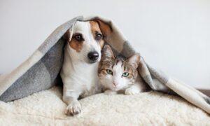 Minsalud promueve la vacunación de perros y gatos para prevenir la rabia - 1