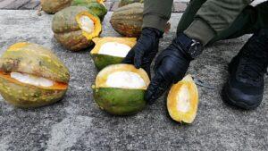 'Ahuyamas voladoras': Cayeron dos tipos con seis kilos de clorhidrato de cocaína 1