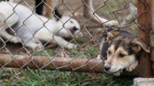 Fiscalía imputa cargos por maltrato animal en Tolima 1