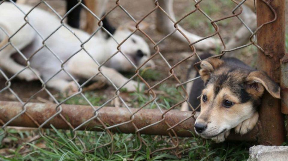 Fiscalía imputa cargos por maltrato animal en Tolima 2