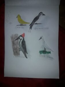 Las aves les harán libres 1