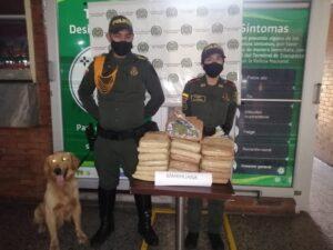 'Jeffry' olfateó 20 kilos de marihuana dentro de un bus en la Terminal de Transportes de Ibagué 1