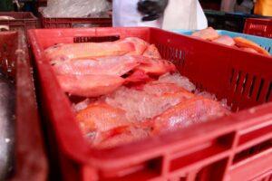 Intensifican inspecciones a plazas de mercado durante Semana Santa 1