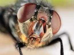 Vuelven las moscas 1