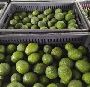 Pequeños productores del Tolima están perdiendo sus cosechas por cuenta de los paros y bloqueos en ejes viales 1