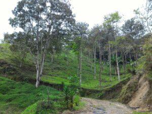 Sendero de Calambeo hacia Ambalá: contacto con la naturaleza 1