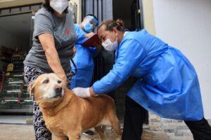 Más de 3.000 mascotas han sido vacunadas contra la rabia en Ibagué 1